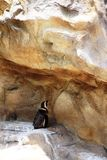 Einsamer Pinguin Lizenzfreie Stockbilder