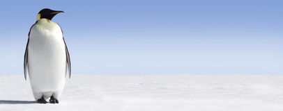 Einsamer Pinguin Stockfoto