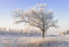 Einsamer schneebedeckter Baum auf einem Gebiet Stockfotos