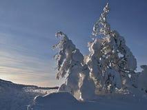 Einsamer schneebedeckter Baum in der Winterlandschaft Stockfotografie