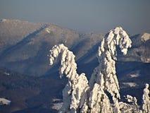 Einsamer schneebedeckter Baum in der Winterlandschaft Lizenzfreie Stockfotos