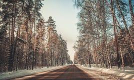 Einsamer schneebedeckter Waldweg des grauen Winters Stockfoto