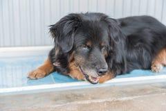 Einsamer schwarzer Hund mit traurigen Augen ist, wartend an legend und jemand Stockfotografie