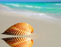 Einsamer Seashell auf Strand stockbilder