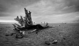Einsamer Stamm auf dem Strand an einem bewölkten Tag Stockfoto
