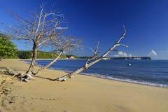 Einsamer Strand in Brasilien, das mit dem hölzernen Boot fährt lizenzfreie stockfotos