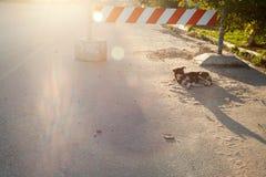 Einsamer Streukanaillehund, der auf einer Straße unter dem Stoppschild liegt Stockbilder