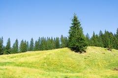 Einsamer Tannenbaum auf einem Hügel Stockbild