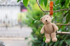Einsamer Teddybär Stockbilder