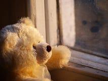 Einsamer Teddybär Stockfotografie