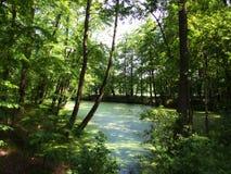 Einsamer Teich Stockbilder