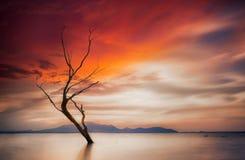 Einsamer toter Baum Stockbild