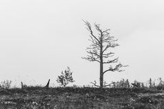 Einsamer toter Baum stockfotografie