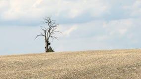 Einsamer toter Baum auf dem Horizont eines gepflogenen Feldes Stockbild