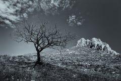 Einsamer toter Baum mit Berg schaukelt in den Hintergrund Lizenzfreie Stockfotografie