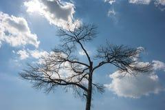 Einsamer toter Baum Naturkunst gegen den blauen Himmel mit Wolken, Sonne lizenzfreies stockbild