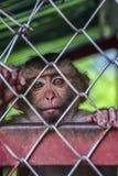 Einsamer, trauriger Affe in einem Käfig in Thailand Stockfotos