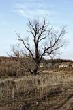 Einsamer trockener Baum auf dem Hintergrund eines kleinen Dorfs Lizenzfreies Stockbild