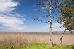Einsamer trockener Baum gegen den blauen Himmel und den Fluss Lizenzfreie Stockfotografie