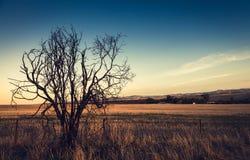 Einsamer trockener Baum Tonen des Effektes Stockfoto
