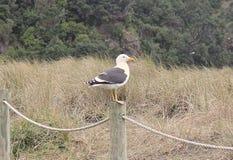 Einsamer Vogel Stockfotos