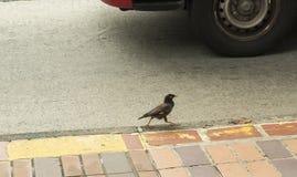 Einsamer Vogel Lizenzfreie Stockfotos