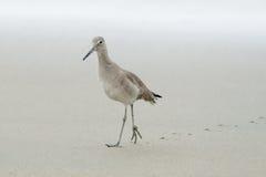 Einsamer Vogel auf der langen Wanderung, die Schritte zurückläßt Lizenzfreie Stockfotografie