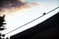 Einsamer Vogel auf elektrischem Draht lizenzfreie stockfotos