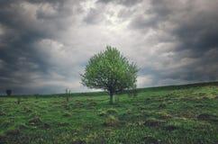 Einsamer wachsender Apfelbaum auf einem Hintergrund von dunklen Sturmwolken lizenzfreie stockfotografie