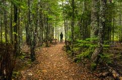 Einsamer Wanderer auf Forest Path Stockfotos