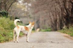 Einsamer Wartehund Stockfotografie