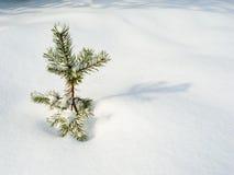 Einsamer Weihnachtsbaum Lizenzfreie Stockfotos