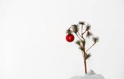 Einsamer Weihnachtsbaum lizenzfreie stockbilder