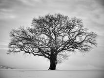 Einsamer Winterbaum Lizenzfreies Stockfoto