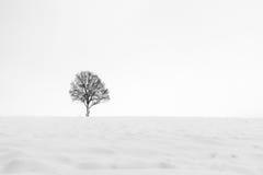 Einsamer Winterbaum Lizenzfreies Stockbild