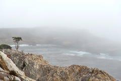 Einsamer Zypressenbaum im Nebel im Punkt-Lobos-Park, pazifisch lizenzfreies stockbild