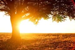 Einsames Baumschattenbild auf geöffnetem Feld Lizenzfreie Stockfotografie