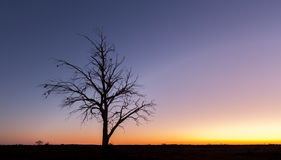 Einsames bloßes Baumschattenbild an der Dämmerung Stockfotografie
