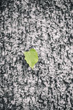 Einsames grünes Blatt auf schwarzem Hintergrund Stockfoto