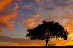 Einsames großes Baum-Schattenbild gegen den Sonnenunterganghimmel Stockfotografie