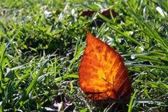 Einsames Herbst-Blatt im Gras Stockfotografie