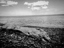 Einsames Holz am Ufer Lizenzfreie Stockfotos