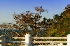 Einsames Meer des Baums Lizenzfreie Stockfotografie