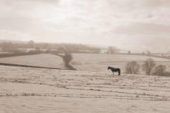 Einsames Pferd Lizenzfreie Stockfotos