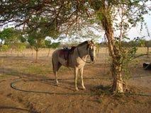 Einsames Pferd lizenzfreie stockbilder