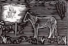 Einsames Pferd Stockfotos