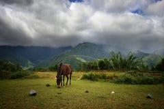 Einsames Pferd auf einem Hintergrund der Berge Stockfotos