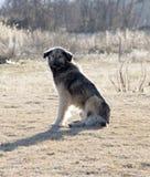 Einsames Sitzen des streunenden Hundes Stockbild