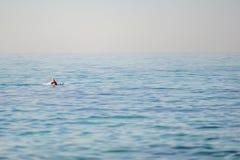 Einsames Snorkler Lizenzfreie Stockfotografie