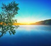Einsames Suppengrün, das in einem Teich bei Sonnenaufgang wächst Stockfoto